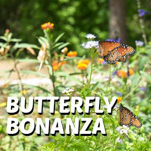 Join Blanco County Master Gardeners And Help Plant The Science Millu0027s New Butterfly  Garden. Inside The Museum, Find Earth Day Inspired Activities And A ...